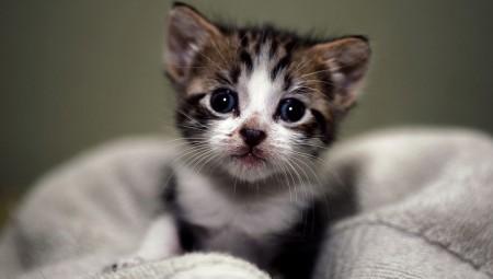 Μερικά πράγματα που δεν γνωρίζατε για τις γάτες