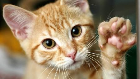 Ξενοδοχείο 5 αστέρων για... γάτες (photos)