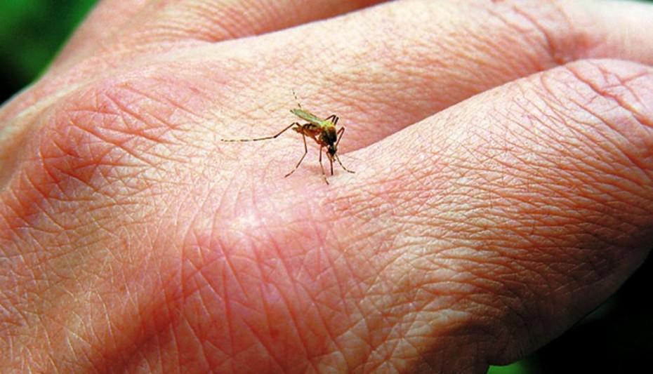 Καμπανάκι από το ΚΕΕΛΠΝΟ: Στους 22 οι νεκροί από τον ιό του Δυτικού Νείλου