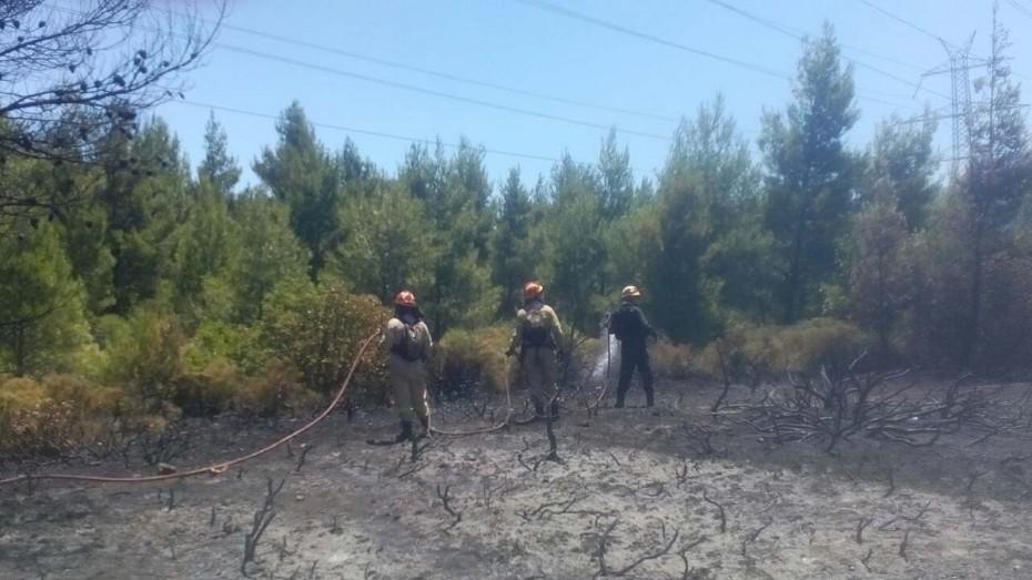 Ισχυρή πυρκαγιά στη Σέτα Ευβοίας