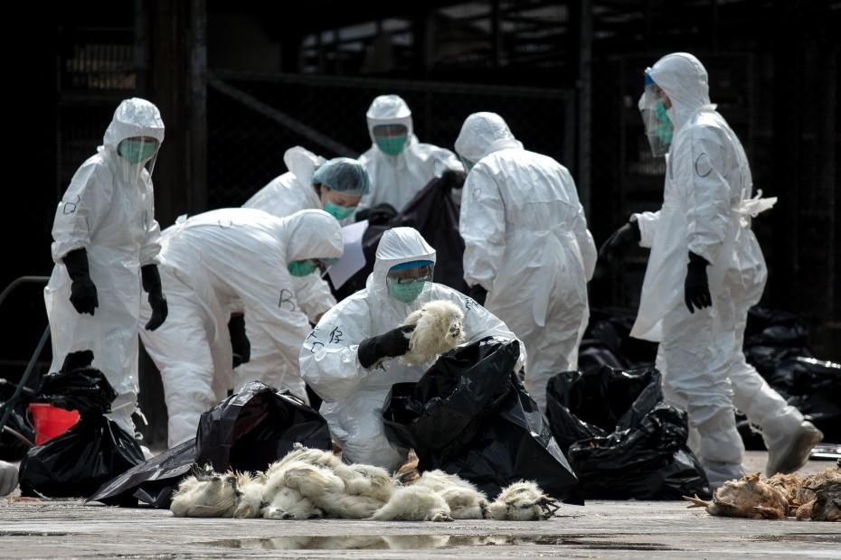 Κρούσματα γρίπης των πτηνών στη Βουλγαρία