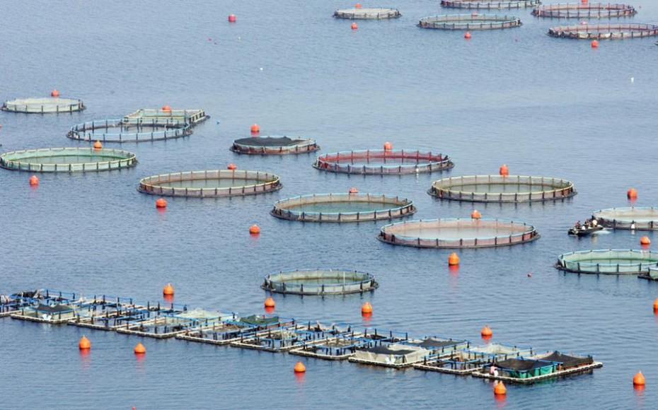 Globefish: «Βαρίδι» η τουρκική παραγωγή για τις τιμές στα ψάρια ιχθυοκαλλιέργειας