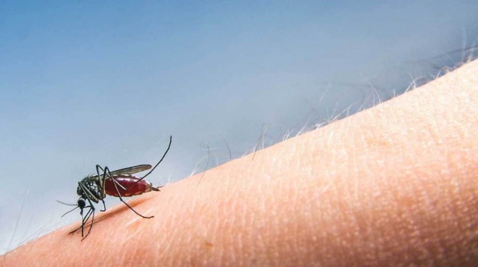 Θετικά κρούσματα ιού του Δυτικού Νείλου στην Ελλάδα