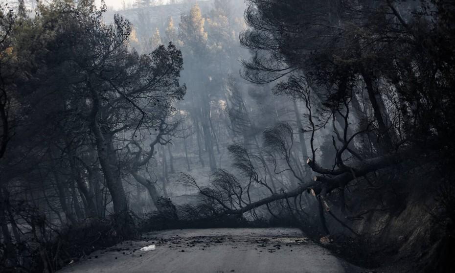Πυρκαγιά στην Εύβοια: Εξετάζεται το ενδεχόμενο εμπρησμού