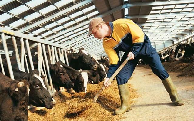 Κτηνοτρόφοι: Μας πνίγει η παράταση στις επιταγές κατά 75 μέρες!