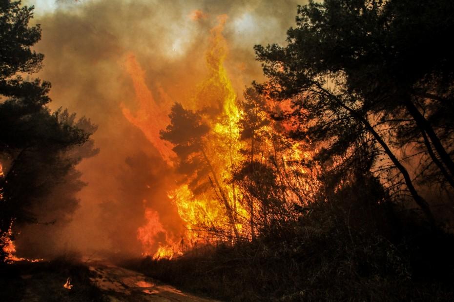 Στις φλόγες η Καλιφόρνια - Στάχτη 40.000 στρέμματα, εκκενώνονται σπίτια