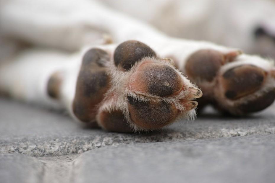 Κιλκίς: Κτηνοτρόφος σκότωσε σκύλο συναδέλφου του επειδή «ενοχλούσε» το κοπάδι του