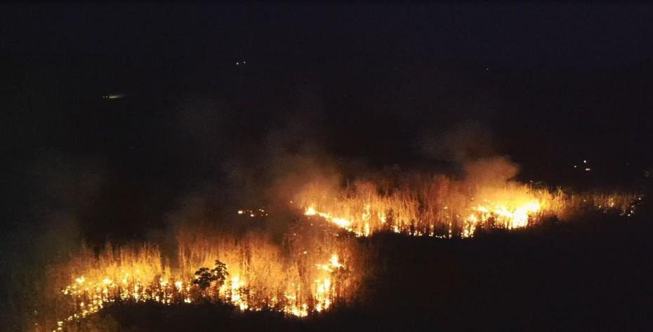 WWF: Καταστράφηκαν πάνω από 430 στρέμματα δασών σε 13 χρόνια - Έκταση διπλάσια του Ην. Βασιλείου